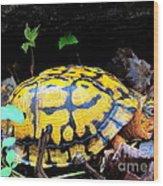 Chesapeake Box Turtle Wood Print