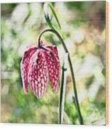 chess-flower in the gardens of Enkoping spring 2012 Wood Print