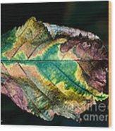 Chestnut Autumn Mosaic Wood Print