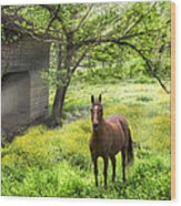 Chestnut Horse In A Sunny Meadow Wood Print