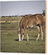 Chestnut In The Pasture Wood Print