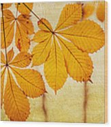 Chestnut Leaves At Autumn Wood Print