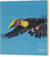 Chestnut-mandibled Toucan Flying Wood Print
