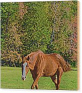 Chestnut Red Horse Wood Print