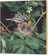 Chestnut-sided Warbler At Nest Wood Print