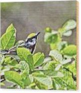 Chestnut Sided Warbler Wood Print