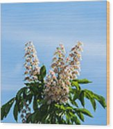 Chestnut Tree Blossoms - Featured 2 Wood Print