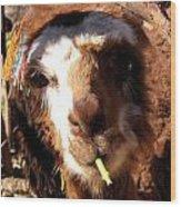 Chewing Llama Wood Print