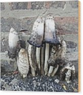 Chicago Alley Shrooms Wood Print