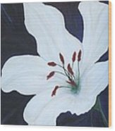 Chicago Snow White Lusterlily Wood Print