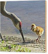 Chick At The Lake Wood Print