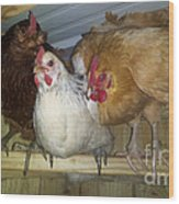 Chick Trio  Wood Print