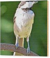 Chickadee 101 Wood Print