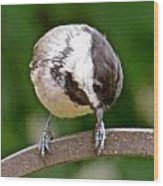 Chickadee 103 Wood Print