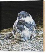 Chickadee 109 Wood Print