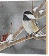 Chickadee 117 Wood Print