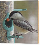 Chickadee And A Big Nut Wood Print