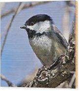 Chickadee At Carson Nature Center Wood Print