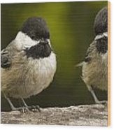Chickadee Dee Dee Wood Print by Jean Noren