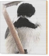 Chickadee-img-2147-001 Wood Print
