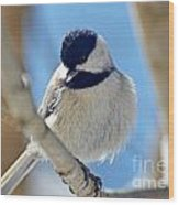 Chickadee On A Bright Day  Wood Print