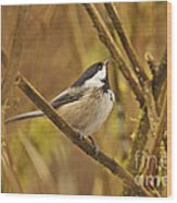 Chickadee On Alert Wood Print
