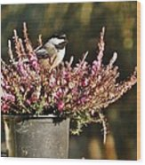 Chickadee On Heather Wood Print
