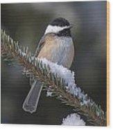 Chickadee On The Spruce Wood Print