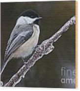 Chickadee Pictures 228 Wood Print