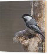 Chickadee Pictures 261 Wood Print
