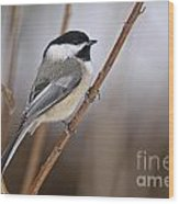 Chickadee Pictures 316 Wood Print