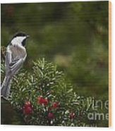 Chickadee Pictures 373 Wood Print