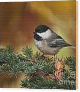 Chickadee Pictures 375 Wood Print