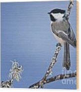Chickadee Pictures 409 Wood Print