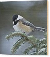 Chickadee Pictures 521 Wood Print