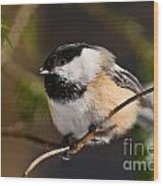 Chickadee Pictures 561 Wood Print