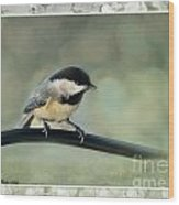 Chickadee With Frame  Wood Print