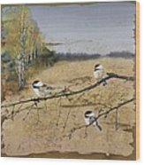 Chickadees And A Row Of Birch Trees Wood Print