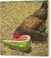 Chicken And Her Watermelon Wood Print by Sandi OReilly