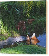 Chicken By The Pond Wood Print