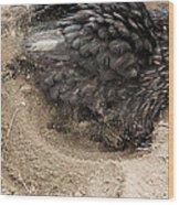 Chicken Scratchin Wood Print