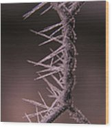 Chicken Wire Spikes Wood Print