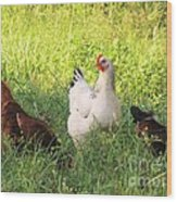 Chickens In Tall Grass Wood Print