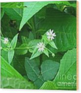 Chickweed Trio Wood Print