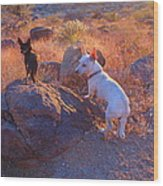 Chico And Paco The Mountain Dogs Wood Print
