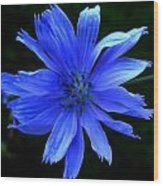 Chicory 2 Wood Print by Mark Malitz