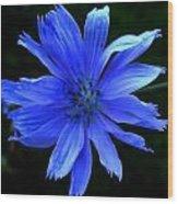 Chicory 2 Wood Print