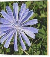 Chicory Wood Print