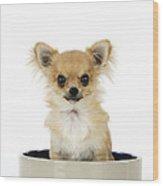 Chihuahua Dog In Bowl Wood Print