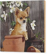 Chihuahua Dog In Flowerpot Wood Print